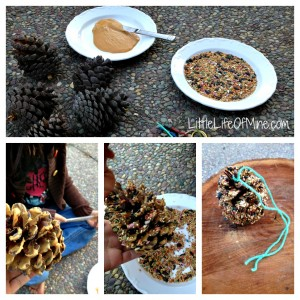 pinecone bird feeder steps